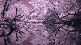 Snug Harbour in infrared, Snug Harbour, Toronto Islands