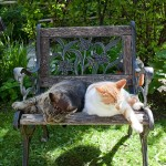 Sleeping cats, Ward's Island, Toronto Islands