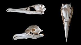 Cormorant Skull, Ward's Island, Toronto Islands