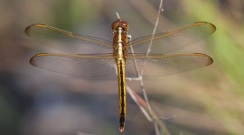 Dragonfly, Archie Carr National Wildlife Refuge, Florida