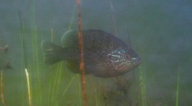 Sunfish, Hanlan's Point, Toronto Islands
