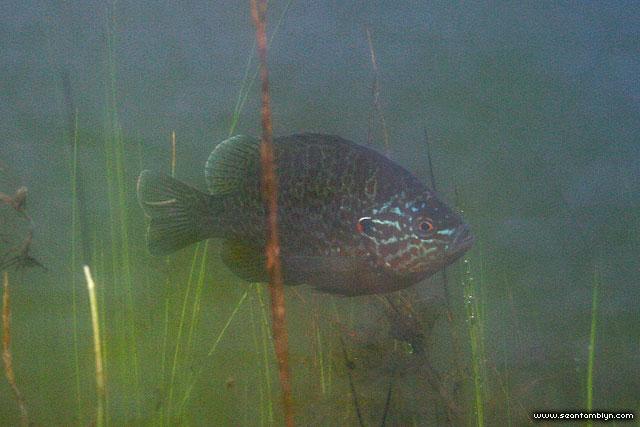 Sunfish, Hanlan's Point, Toronto Islands