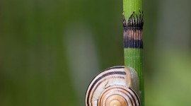 Sleeping snail, Algonquin Island, Toronto Islands