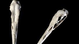 Great blue heron skull, Franklin Island, Georgian Bay