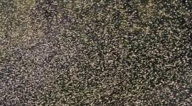 Gnat swarm detail, Snake Island, Toronto Islands
