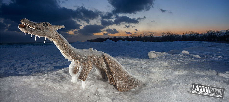 Lagoon Report -- Toronto Island Photography