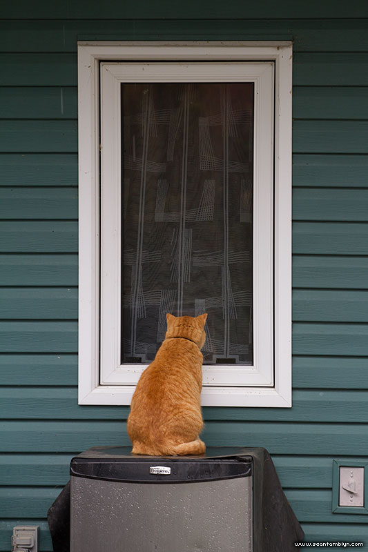 A cat wants inside, Ward's Island, Toronto Islands