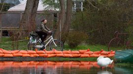 Islander cycles past sandbags and swan, Algonquin Island, Toronto Islands