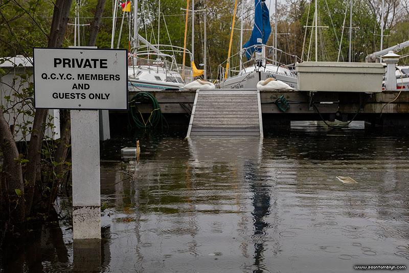 Swans on QCYC, Ward's Island, Toronto Islands