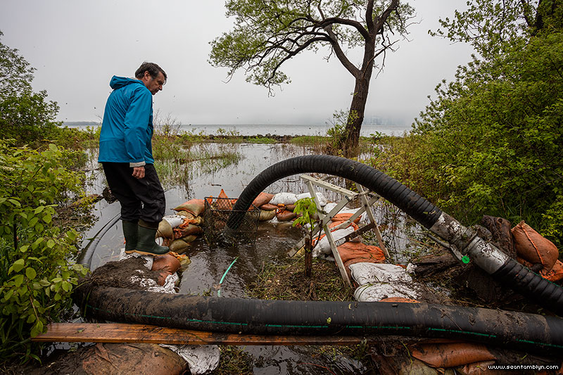 Inspecting pump intake hose, Ward's Island, Toronto Islands