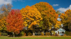 Fall colours on Fifth St., Ward's Island, Toronto Islands