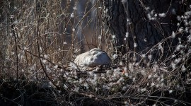 Goose on nest, Doughnut Island, Toronto Islands