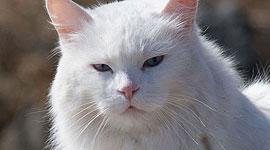 Hunter the cat, Ward's Island, Toronto Islands