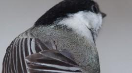 Chickadee feathers, Centre Island, Toronto Islands