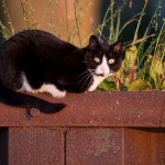 Breakwall cat, Algonquin Island, Toronto Islands