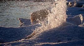 Ward's beach geyser, Ward's Island, Toronto Islands