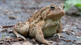 Toad, Ward's Island, Toronto Islands