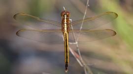 Dragonfly, Archie Carr National Wildlife Refuge, Florida