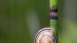 Sleeping snail, Algonquin Island, Toronto Islands