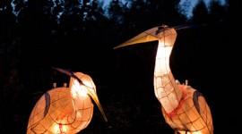 Fire Herons, Ward's Island, Toronto Islands