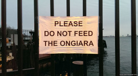 Please do not feed the Ongiara, Ward's Island, Toronto Islands
