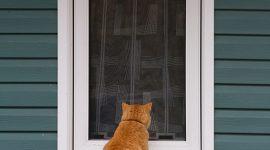 A cat wants inside, Ward's Island, Toronto Islands