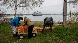 Sandbagging on Bayview, Ward's Island, Toronto Islands